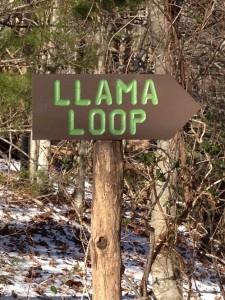 Llama Loop